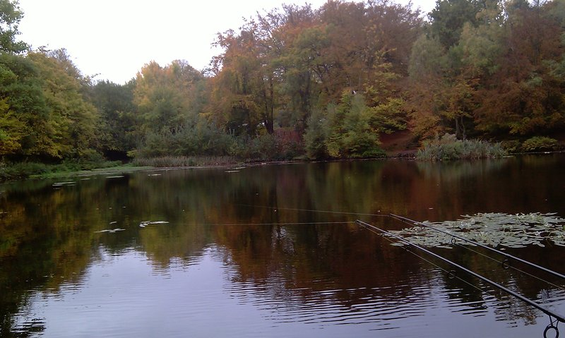 Coarse fishing keston ponds kent england coarse for Garden pond kent